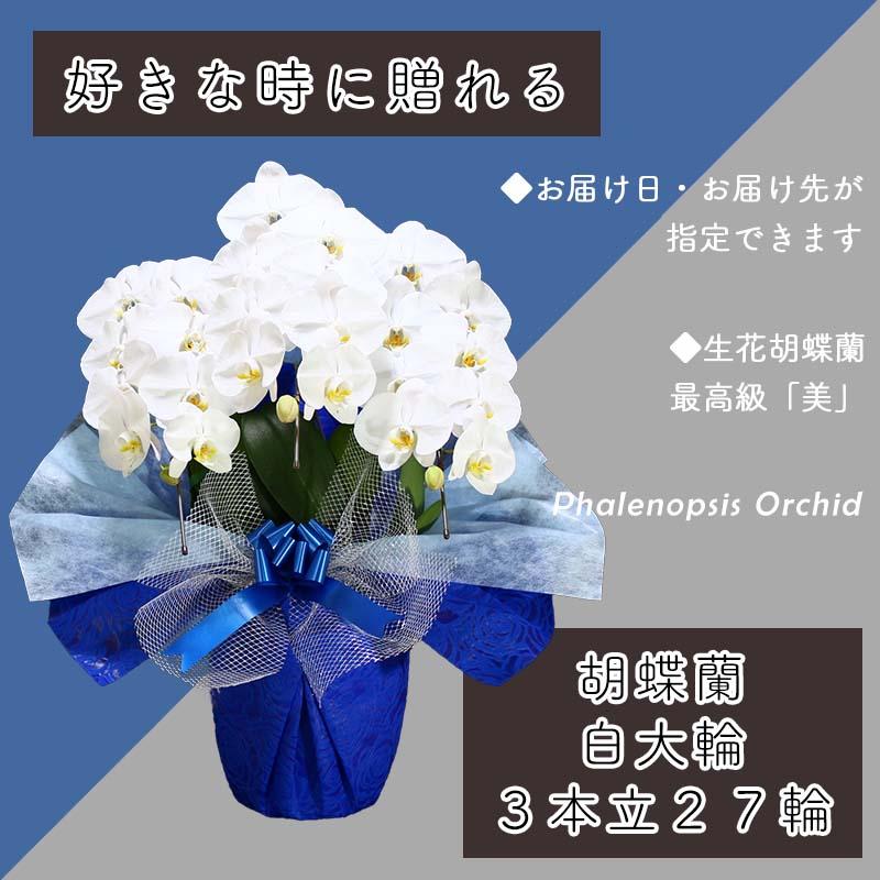099H378 3本立て白色胡蝶蘭27輪〜30輪