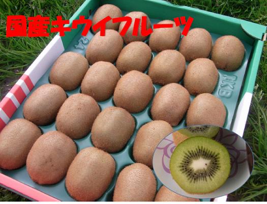 B221 国産キウイフルーツ 20〜24玉
