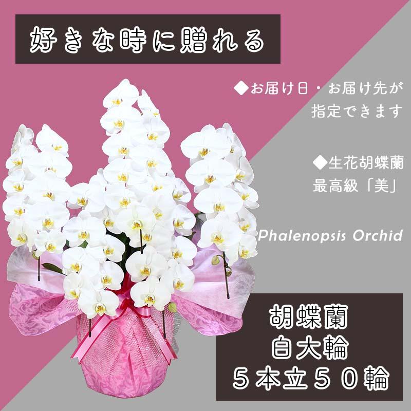 099H385 5本立て白色胡蝶蘭50輪〜60輪