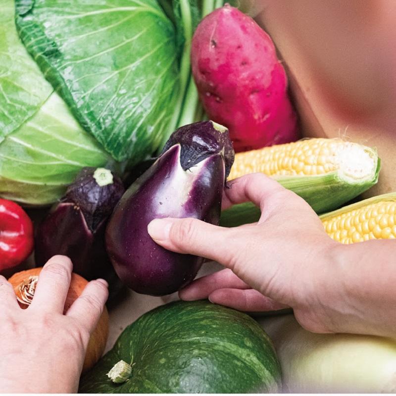 010B477 【期間限定】季節の泉州野菜セット(大:野菜12種)