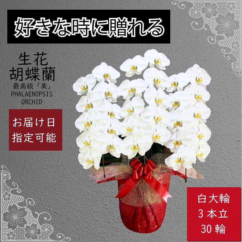 099G061 3本立て白色胡蝶蘭30輪〜33輪