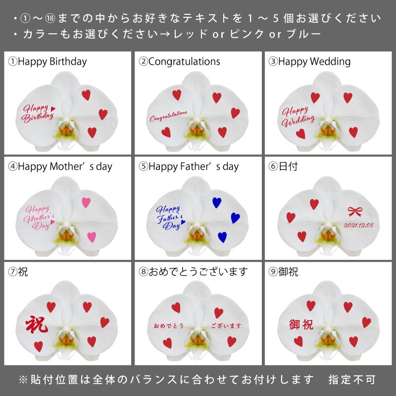 099G084 花びらにメッセージプリント&ハート柄白色胡蝶蘭