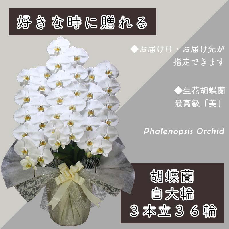 099H381 3本立て白色胡蝶蘭36輪〜39輪